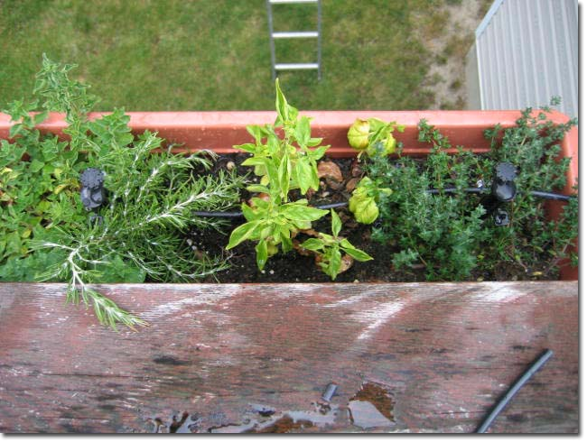 "Picture of the 8"" multi-stream stakes in the herb container"