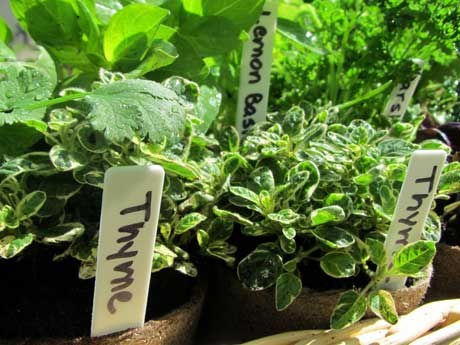 Several herbs that you can grow in your landscape and eat.